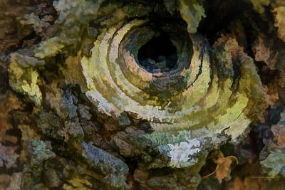 Photograph - Eye Of The Tree Art by Mick Anderson