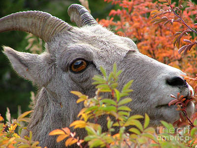 Photograph - Eye On Ewe by Katie LaSalle-Lowery