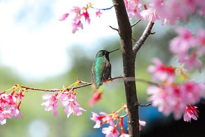 Photograph - Eye On Spring by Lynn Bauer