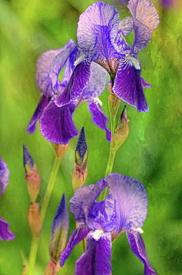 Photograph - Eye On The Iris by Diana Angstadt