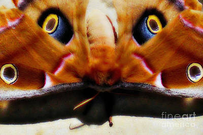 Greek Insects Photograph - Eye On You by Anita Faye