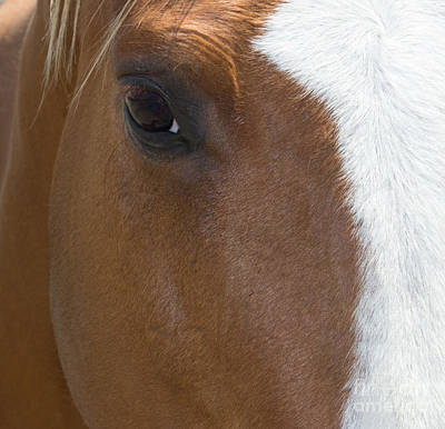 Photograph - Eye On You Horse by Roberta Byram