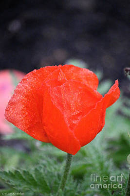 Photograph - Eye Popping Poppy by Susan Herber