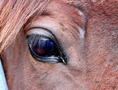 Photograph - Eye See You by Mariarosa Rockefeller