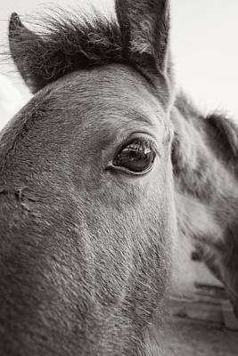 Photograph - Eye See You by Tina Ernspiker