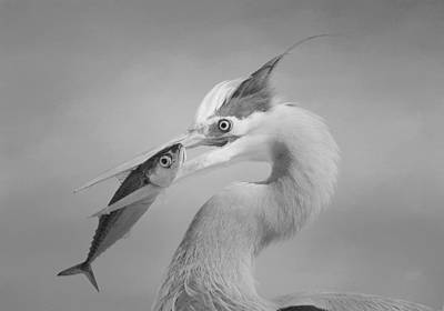 Photograph - Eye To Eye by Fraida Gutovich