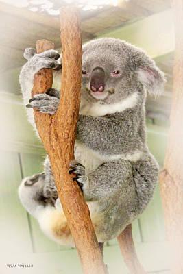 Photograph - Eye To Eye With Mr. Koala by Susan Vineyard