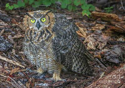 Eye To Eye With Owl Art Print