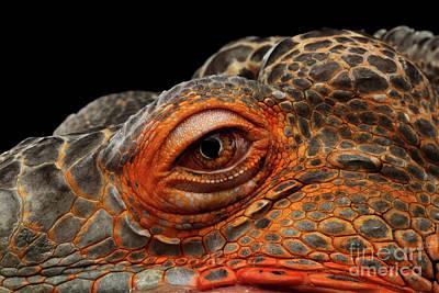 Eyeball Of Dragon Head Art Print by Sergey Taran
