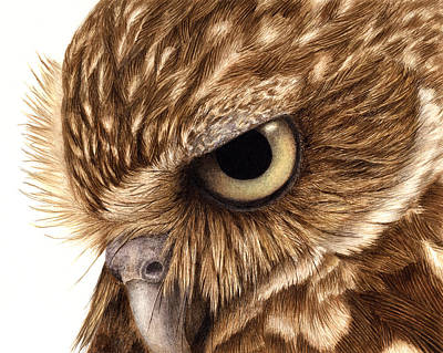 Burrowing Owl Painting - Eyeful by Pat Erickson