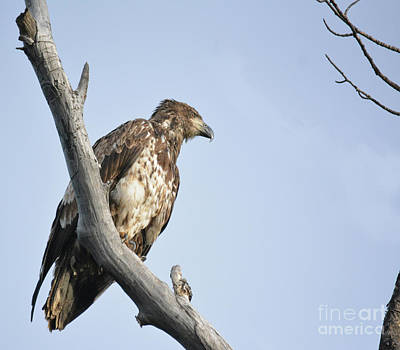 Photograph - Eyeing For Fish by Vivian Martin