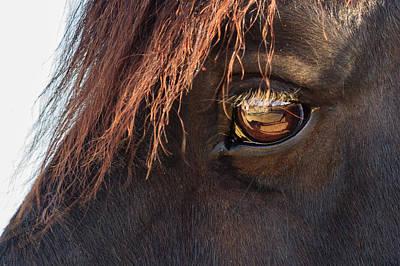 Photograph - Eyeing The Reflection by Joni Eskridge