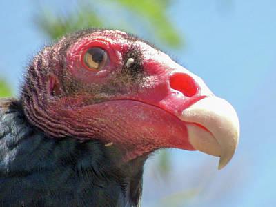 Phoenix Zoo Photograph - Eyeing The World by Kimo Fernandez