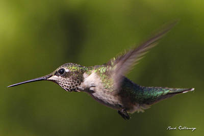 Photograph - Eyelashes Hummingbird by Reid Callaway