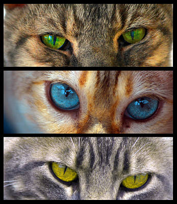 Photograph - Eyes 1 by Theresa Pausch