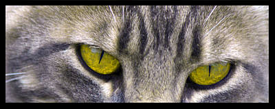 Photograph - Eyes 1c by Theresa Pausch