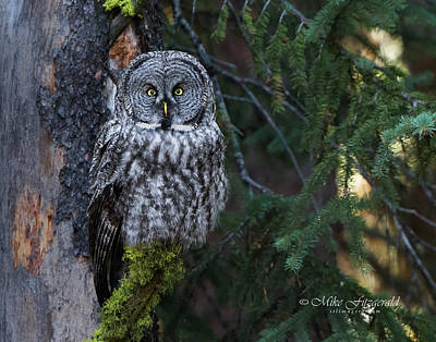 Photograph - Eyes In The Forest by Mike Fitzgerald