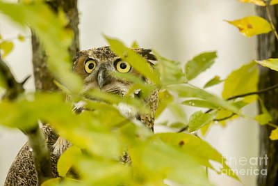 Photograph - Eyes In The Leaves by Dan Friend