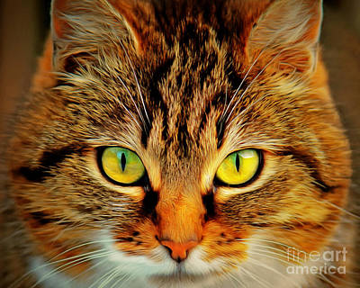 Photograph - Eyes Of A House Cat Who Would Be King Painterly 20170916 by Wingsdomain Art and Photography