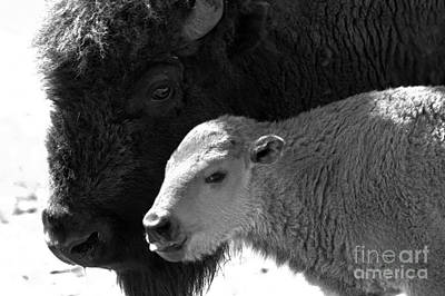 Photograph - Eyes Of A Proud Mom Black And White by Adam Jewell