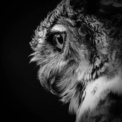 Photograph -  Eyes Of Creation by Rae Ann  M Garrett