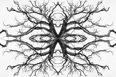 Photograph - Eyes Of The Ents by John Williams