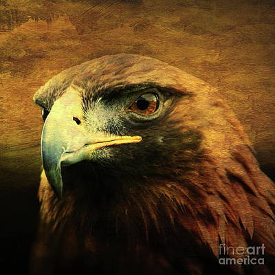 Bif Photograph - Eyes Of The Golden Hawk . Square by Wingsdomain Art and Photography