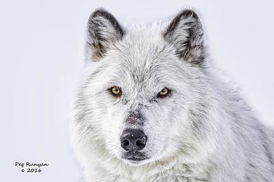 Photograph - Eyes Of The Hunter by Peg Runyan