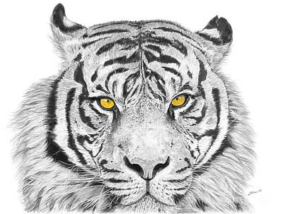 Eyes Of The Tiger Print by Shawn Stallings