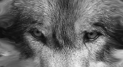 Photograph - Eyes Of The Wild by Shari Jardina