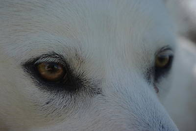 Paws4critters Photograph - Eyes Of The Wolf - In Her Eyes by Robyn Stacey