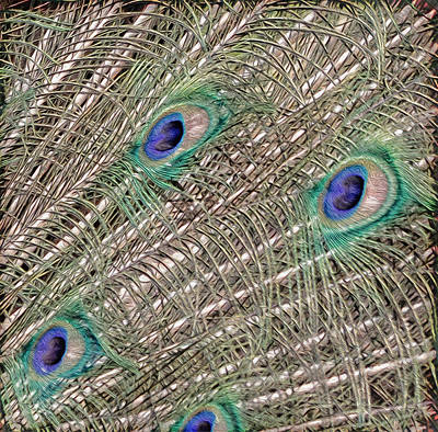 Eyes On A Branch Art Print