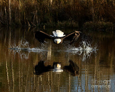 Photograph - Eyes On The Prize by Heather King