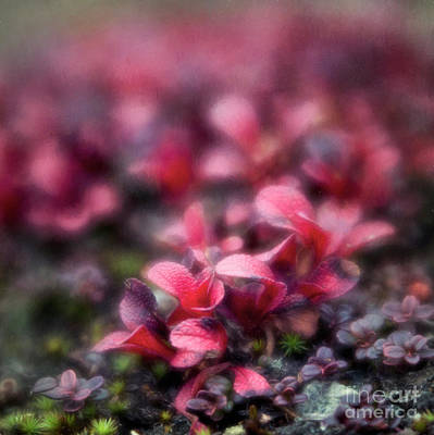 Bearberry Leaves Art Print