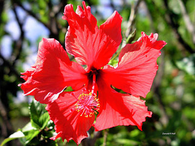 F20 Red Hibiscus Art Print by Donald k Hall