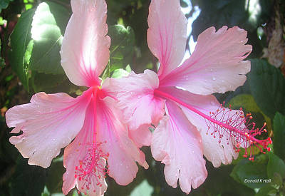 F4 Hibiscus Flowers Hawaii Art Print by Donald k Hall