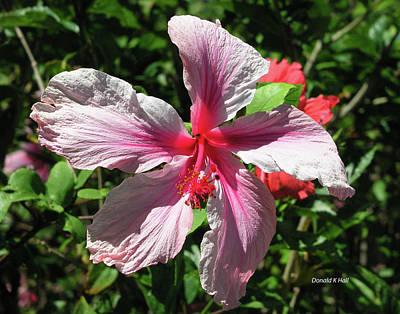 F5 Hibiscus Flower Hawaii Art Print by Donald k Hall