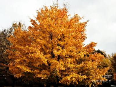 Photograph - Fabulous Fall Tree  by Christy Ricafrente