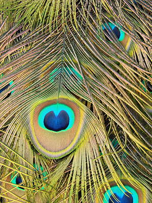 Art Print featuring the photograph Fabulous Feathers by Margaret Bobb