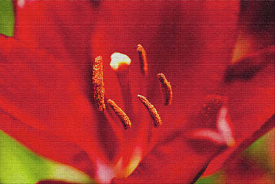 Designers Choice Photograph - Fabulous Red by Don Wright