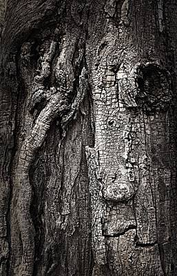 Photograph - Face In A Tree by JoAnn Lense