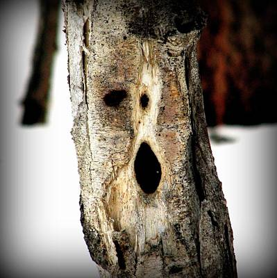 Photograph - Face In The Woods by Leah Grunzke