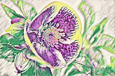 Digital Art - Face Of A Flower Color Pencil by Mary Raderstorf