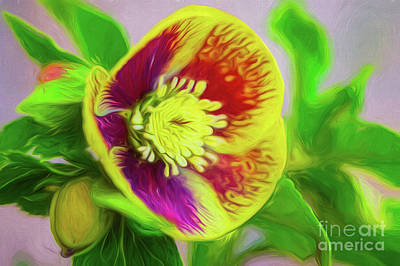 Digital Art - Face Of A Flower Vivid Painting by Mary Raderstorf