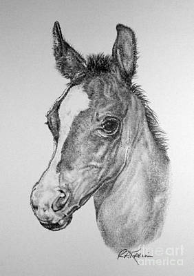 Wild Horses Drawing - Face Of A Foal by Roy Anthony Kaelin