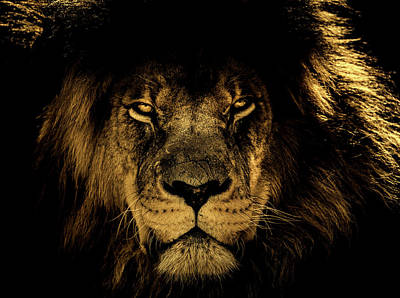 Photograph - Face Of A King by Pixabay