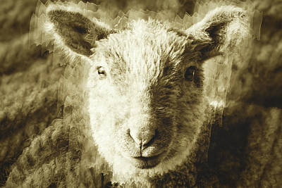 Photograph - Face Of A Lamb With Knitting Wool Texture Fine Art by Jacek Wojnarowski