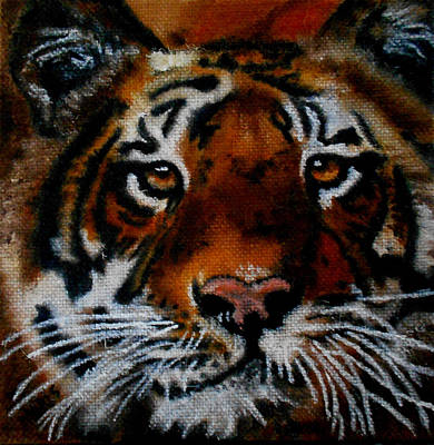 Painting - Face Of A Tiger by Maris Sherwood