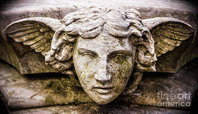 Photograph - Face Of An Angel by Colleen Kammerer