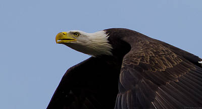 Photograph - Face Of An Eagle Close Up by Jeff at JSJ Photography